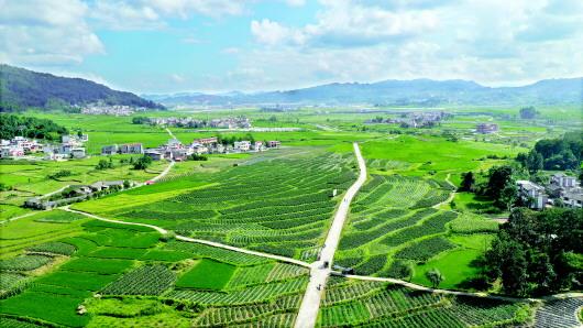 【秋后坝区传捷报】新型农业社会化服务体系为坝区赋能