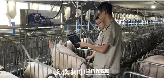 【天眼看乌镇】布局AI养猪 阿里云考虑贵州