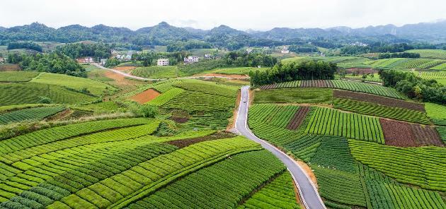 描绘大地丰收的精彩画卷 | 贵州抢抓十二个农业特色产业生产 决战决胜脱贫攻坚