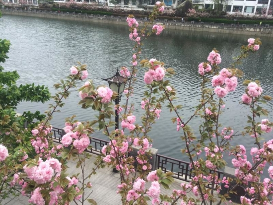 入春!贵州83县(市)进入气象学意义上的春天