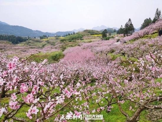 """松桃水源村:产业春风拂大地    """"桃花源""""里孕""""金山"""""""