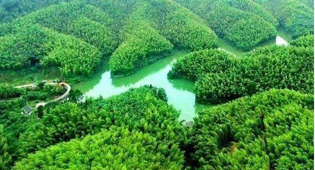 """【多彩贵州·相约2020】将农村产业革命向纵深推进之特色林业篇:天然""""宝贝""""促增收 特色林业撑起""""绿美富"""""""