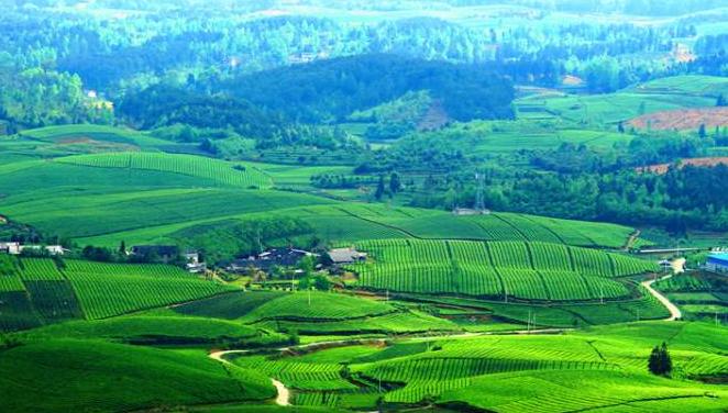 【多彩贵州·相约2020】产业革命  富了农家 ——贵州冲刺90天 打赢歼灭战报道之四