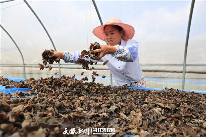 【多彩贵州·相约2020】食用菌智能化生产 老百姓家门口受益|纳雍县创新种植技术 全产业链推动产业发展