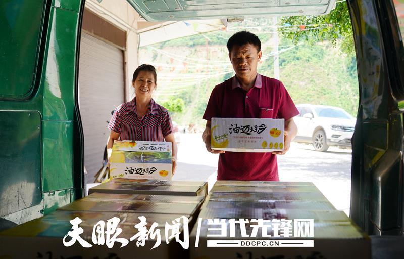 """【多彩贵州·相约2020】致富""""金果果""""!望谟:芒果丰收季 产销两头旺"""