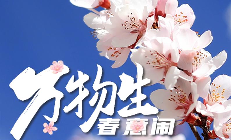 云周刊第33期 | 元宵春意知几许 笑语盈盈踏春去