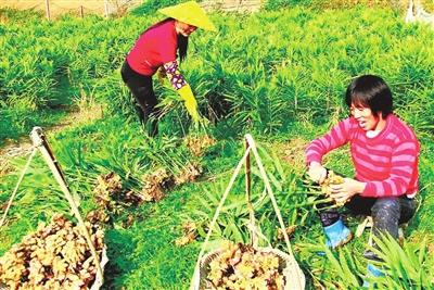 福泉市:全力巩固脱贫成果 共赴全面小康之约