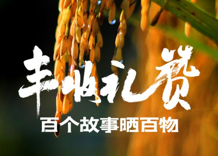 今日丰收节,贵州融媒体云上编辑部有100个故事,你有酒吗?