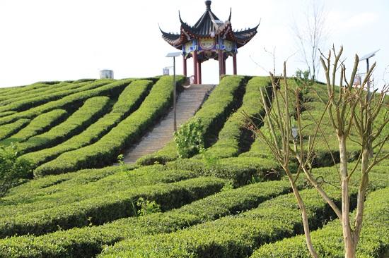 合朋溪镇位于贵州省思南县西北部,距县城75公里,该镇耕地面积1.