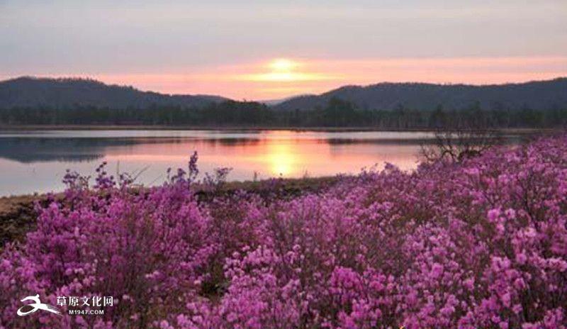 百里杜鹃风景名胜区位于贵州省西北部,毕节地区中部.总面积大约125.