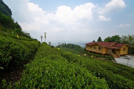 湄潭县云贵山有机生态茶园