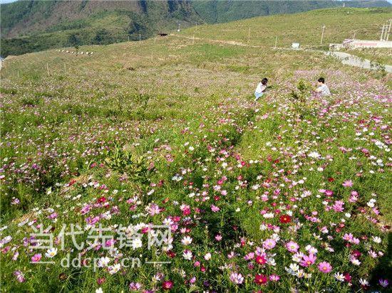 望谟:产旅融合着力打造新屯县城后花园