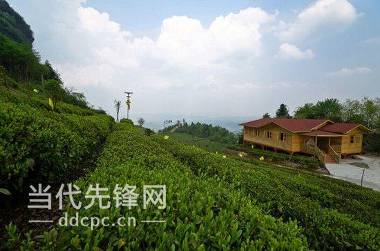 湄潭县云贵山有机生态茶园.贵州省农业园区联席会议办公室供图