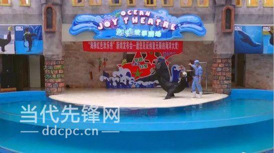 遵义奥特莱斯城市广场海洋馆海狮表演