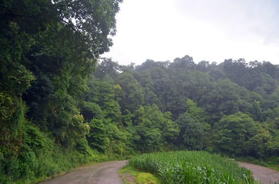 雨后的息烽县温泉镇天台村国有林一片翠郁