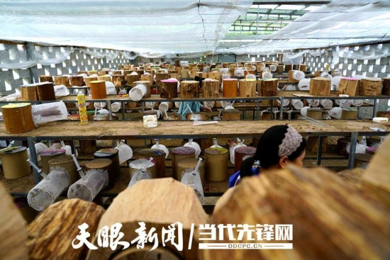 """【多彩贵州·相约2020】望谟县打易镇边王村:""""三养两种""""兴产业   产销两旺好前景"""