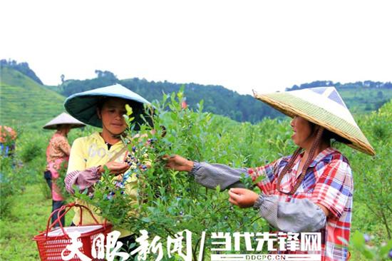 【暑期游·亚博体育手机app下载攻略】麻江蓝梦谷风景诱人