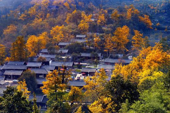 第十五届旅发大会丨银杏之乡景色秀 多彩文化耀盘州