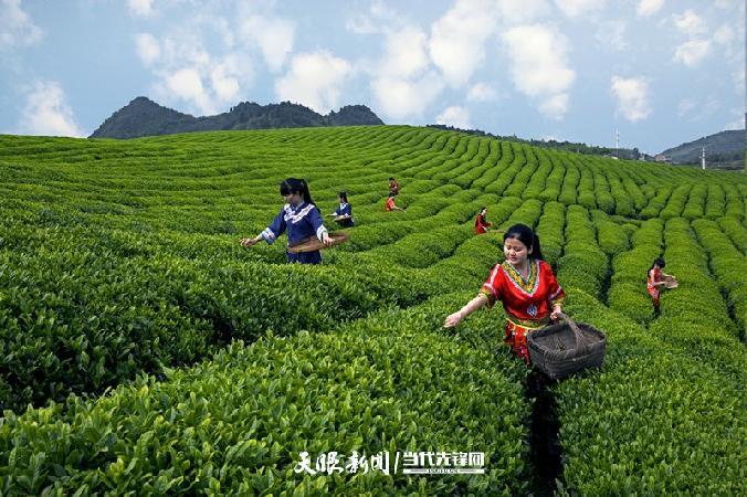 产业革命对对碰①|茶叶VS辣椒:香辣之间,亚博体育手机app下载滋味独好