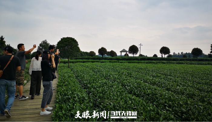 """【天眼头条】是什么,让""""中国国家地理·地道风物""""这群大V对贵州茶连连点赞?"""