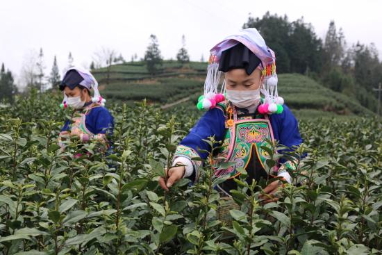 贵州:人勤春来早  复工复产忙