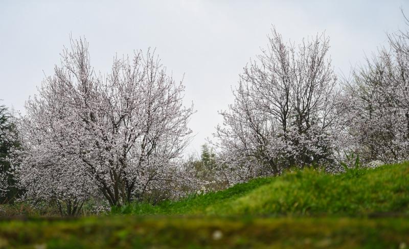 贵阳:花开春天里