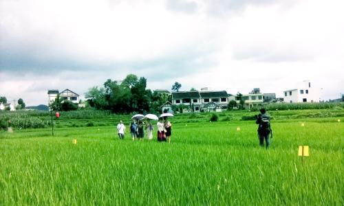 绿水青山就是金山银山!《人民日报》点赞贵州黔西县坚持生态优先绿色发展